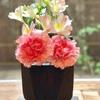 穀雨  庭の茶花