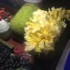 菠萝蜜 つづき