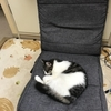 猫達の仁義なき争奪戦が日々開催されている件