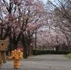 松前町 長い期間にわたって桜を楽しめる松前公園