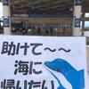 """""""感謝""""や""""文化""""という言葉で命の犠牲の問題を片付けようとする恥ずかしい日本人。いい加減にしてください。「イルカショーに畜産に何もかも。東京五輪に向けて明るみになる深刻な日本の動物問題」  #動物を苦しめないエシカル五輪を目指して"""