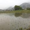 お米を作りに群馬県の東吾妻町に行ってみた。まずは田植えから。(群馬県東吾妻町)