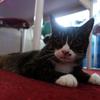 子猫のミィーちゃん