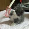 ☆ 猫 🐈 & 浜松城 🏯