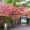 岡崎公園の紅葉にうっとり~八丁味噌ソフトに満足