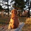 紅葉が舞い降る小平霊園でデートしようよ