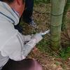 愛甲三郎納涼まつりの天然竹の流しそうめんの竹レールの作り方