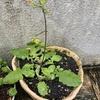 庭の鉢には雑草がいっぱい!
