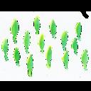 藻のブログ