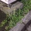 アスファルトの花の写真を撮ってみる ① 四谷三丁目編