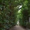 奄美大島観光おすすめルート⑨ ~奄美大島 フクギ並木