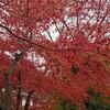 高尾山 紅葉見物