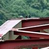 ブッポウソウは赤い橋が好き