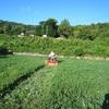 休耕田管理 雑草とのたたかいは続く・・・