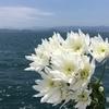 野村克也さんの逝去を惜しむ声が何故こんなに多いのか、に対する考察