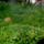 小さな虹と大きな木