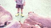 Animals #5 カピバラ(と人間の子)