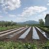 毛豆の種まき始まりました!令和元年も青森県産毛豆を販売致します!