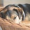 寝てる時に撫でるのは逆効果?睡眠時に犬が撫でられると怒る理由