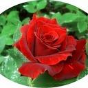 赤い薔薇のSoliloquy