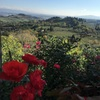 フィレンツェからSan Gimignano サン・ジミニャーノへ