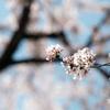 『限りある日々に 花を咲かせる』
