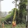 Phòng tránh tai nạn chết người mùa mưa bão tại Sóc Sơn.