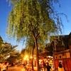 【祇園と先斗町へ徒歩で行ける宿】京都 日昇館 尚心亭 宿泊記
