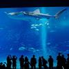 初沖縄旅行『初めての沖縄県 美ら海水族館(Prat 1)』プリキュアショーも堪能(日常)