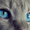 【猫除けグッズの番人くん】効果 野良猫被害に合わないためのおすすめ対策!
