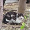 街中の動物・猫