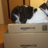 アマゾン梱包と猫