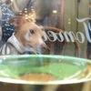 やっぱり犬と酒が好き。犬連れokのカフェ&バー5選 【横浜元町編】