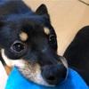 Dr.YUJIRO「朝夜パーフェクトセット」購入! 犬の歯石除去グッズを比較してみた結果、犬の歯科専門の獣医師が開発した商品に惹かれました。