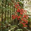 植物の冬支度