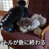 2021.7.16 【大乱闘‼️】 Uno1ワンチャンネル宇野樹より