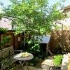 """金沢の """"まちなか奨励金制度 """" で、小さな庭と小さな家を つくりました"""