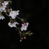 【写真】今年の桜を見ながら
