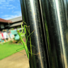 庭は昆虫の王国