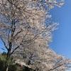 桜とか日記。