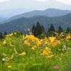 白山高山植物園オープンしてます。