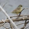 幸運にもカワセミに2週連続遭遇‼️  Nikon「COOLPIX P900」で野鳥撮影《第4回目》