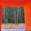 野鳥が訪れる静謐な神社  ― 針名(はりな)神社 ―