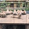 上野動物園のプレーリードッグは演技をするらしい