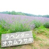ラベンダー摘みへ@三重県伊賀市メナード青山リゾート