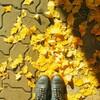 新村の紅葉がきれい。散歩しながら聞きたい曲。