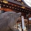 京都の初詣2019、亥年にお参りすべき神社とお寺厳選4選。