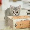 猫を迎える日、何をどう準備すれば良いの?