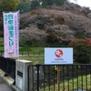 豊田市小原地区の「四季桜まつり」関連の看板などのデザインをしました