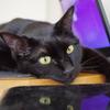 今日の黒猫モモ&ナナの動画はお休みです!